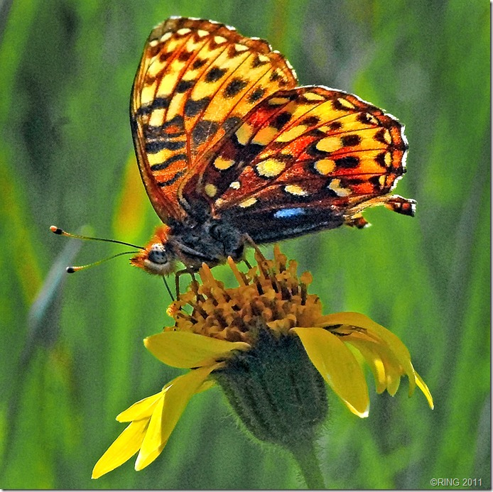 """ERTHAWARE Report #206 """"Where have all the Butterflies Gone?"""""""