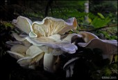 """E.Y.E.S. REPORT #9e -- """"Adventures in Learning to Love Mushrooms"""""""